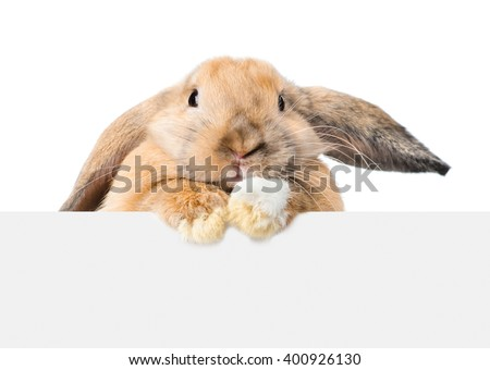 Rabbit looking over a signboard. Isolated on white background - stock photo