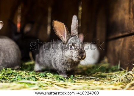 Rabbit. Mammal animal in the farm. Fluffy bunny with cute ear and fur. Small brown, black or gray young sweet domestic pet. Furry rodent. Adorable creature. - stock photo