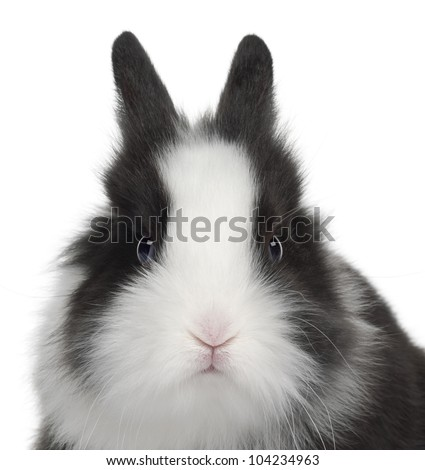 Rabbit, 6 months old, against white background
