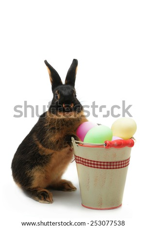 rabbit near a bucket with easter eggs - stock photo