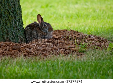 Rabbit nesting by a tree