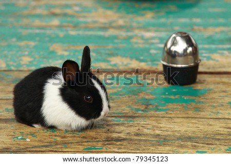 Rabbit on a dining table - stock photo