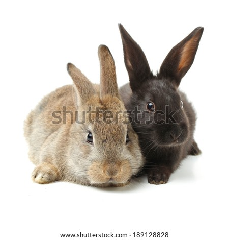 rabbit on a white background  - stock photo