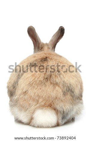 Rabbit on a white background (rear view) - stock photo