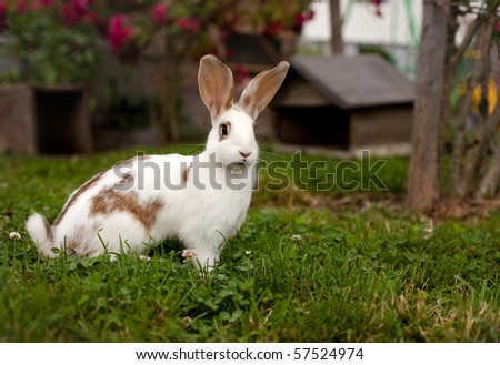 rabbit on grass - stock photo