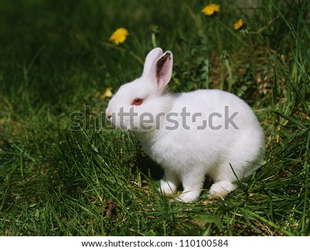 Rabbit on grass, side view - stock photo