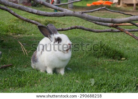 Rabbit on the  green grass