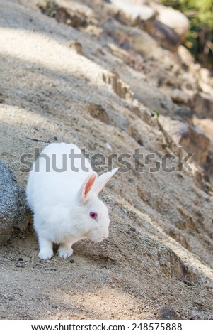 rabbit on the stone in  Thailand - stock photo