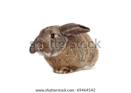 Rabbit on white - stock photo