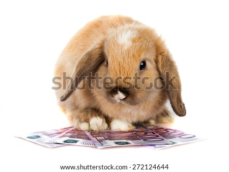 Rabbit, Pets, Cute.