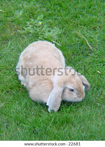 Rabbit resting in the grass - stock photo