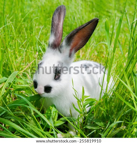 Rabbit sitting in grass, smiling at camera - stock photo