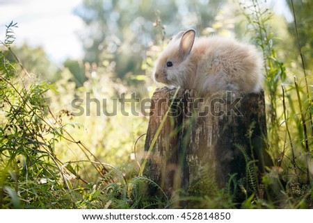 rabbit sitting on a stump in a summer forest