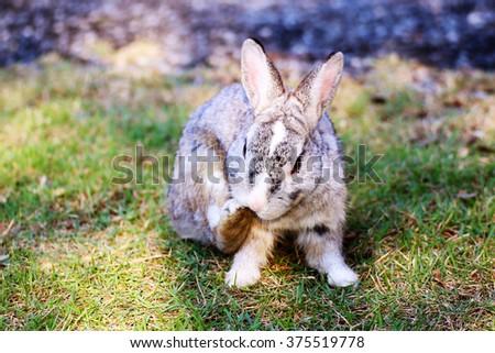 rabbit standing in green grass in summer - stock photo
