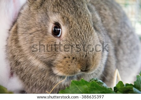 Rabbit that eat a piece of salad