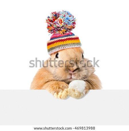 Rabbit  wearing a warm hat looking over a signboard. Isolated on white background
