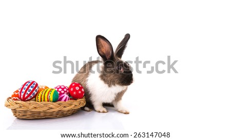 Rabbit with Easter eggs isolated on white background - stock photo