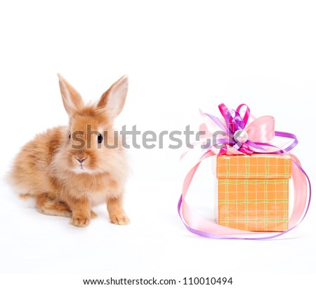 Rabbit with red giftbox - stock photo