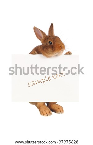 Rabbit with with a white background for text drawing - stock photo