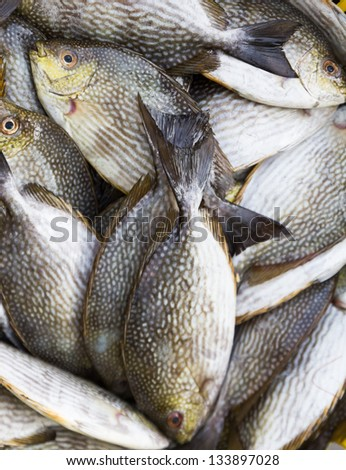 Rabbitfish or  Spinefish  in  fresh market for sale - stock photo