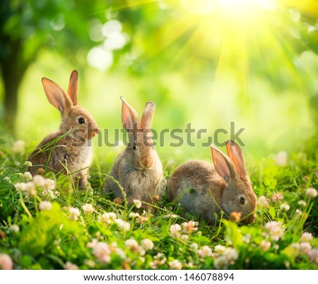 Rabbits. Beauty Art Design of Cute Little Easter Bunny in the Meadow. Spring Flowers and Green Grass. Sunbeams - stock photo