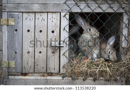 Rabbits in a wooden hutch. - stock photo