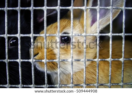 Rabbits in the cage on countryside farm, animals in captivity