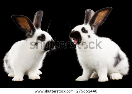 Rabbits isolated on black background - stock photo
