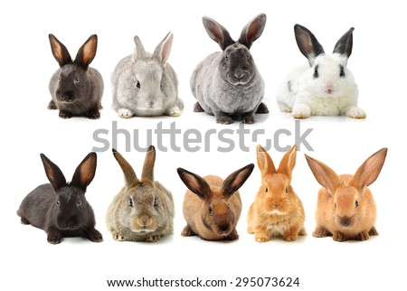 rabbits isolated on white background  - stock photo