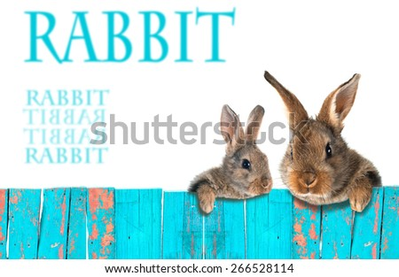 Rabbits leaning on the fence. Bright, a comic collage. A series of collages. Isolation. - stock photo