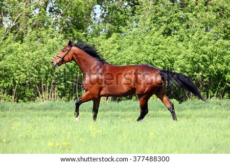 Race horse at farm fields  in summer - stock photo