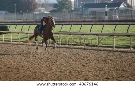 race horse galloping on a race track during morning training - stock photo