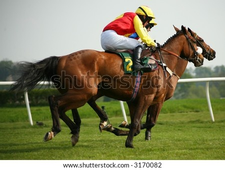 racing horses - stock photo