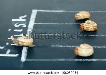 Racing snails close-up - stock photo