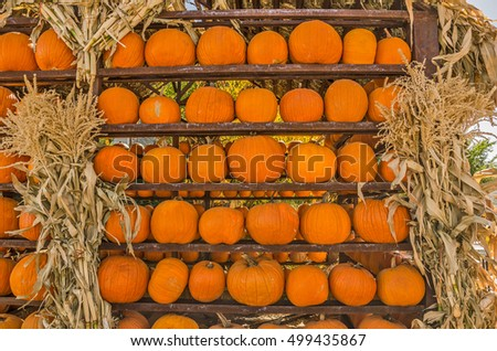 Racks of pumpkins ready and waiting to be put to good use