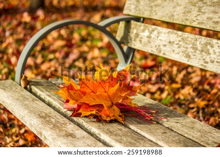 rad and yellow autumn leaves  - stock photo