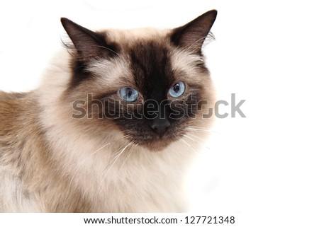 radgoll cat head - stock photo