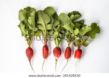 Radish dirty from the soil isolated on a white background  - stock photo