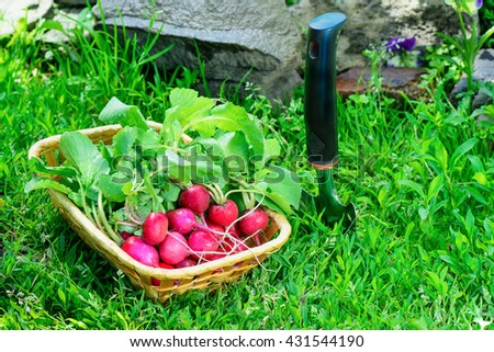 radish vegetable plant harvest basket garden shovel