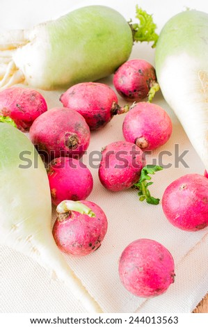 Radishes natural eco-friendly farm. Red and white