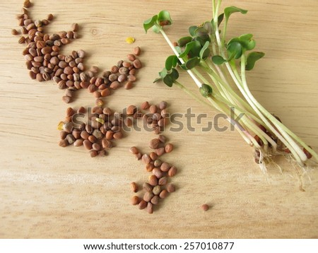 how to cut radish sprouts
