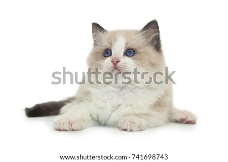 picture free pussy doll cat