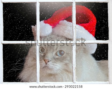 ragdoll cat wearing a Christmas Santa hat in window with snowflakes - stock photo