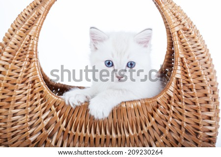 Ragdoll kitten in bell basket on white background - stock photo