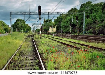 rail tracks and poppies - stock photo