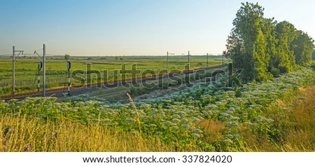 Railroad through a sunny landscape in summer