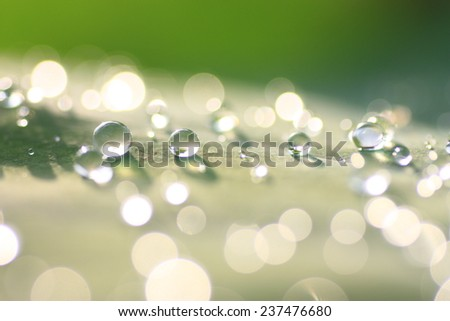 Rain drop on lotus leaf, drops of dew on a green grass - stock photo