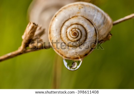 Rain drop on the snail - stock photo