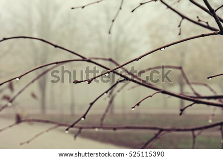 Rain drops on a branch of a tree, shallow depth of field