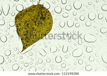 Rain drops on a green leaf, drops on glass. - stock photo